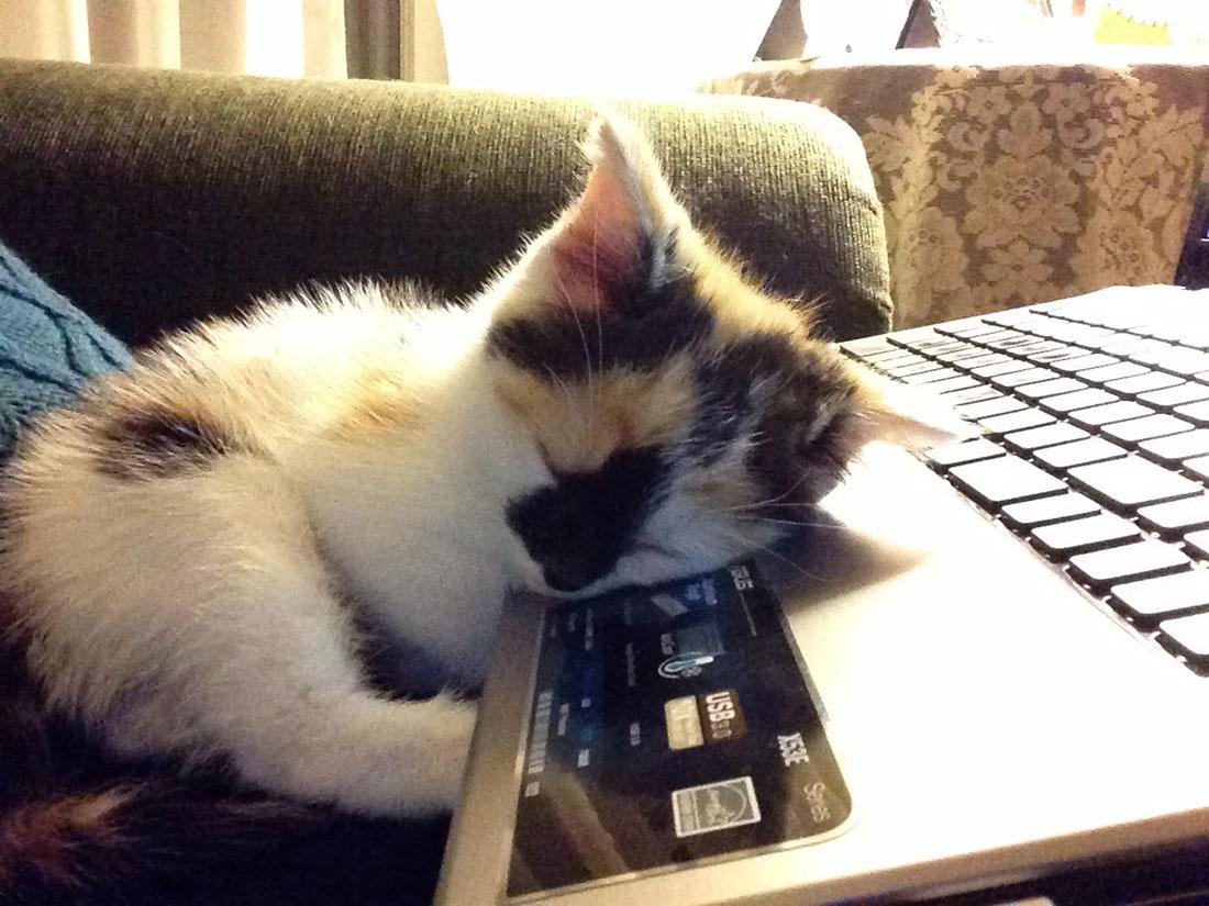 computer-cat-1