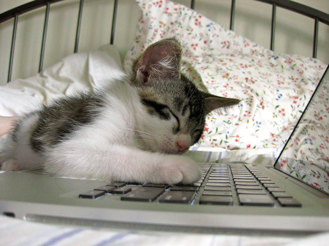 computer-cat-14