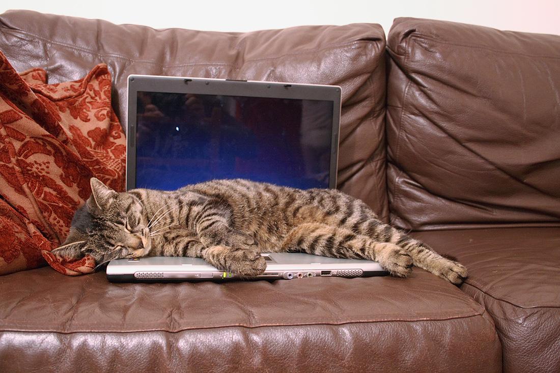 computer-cat-16