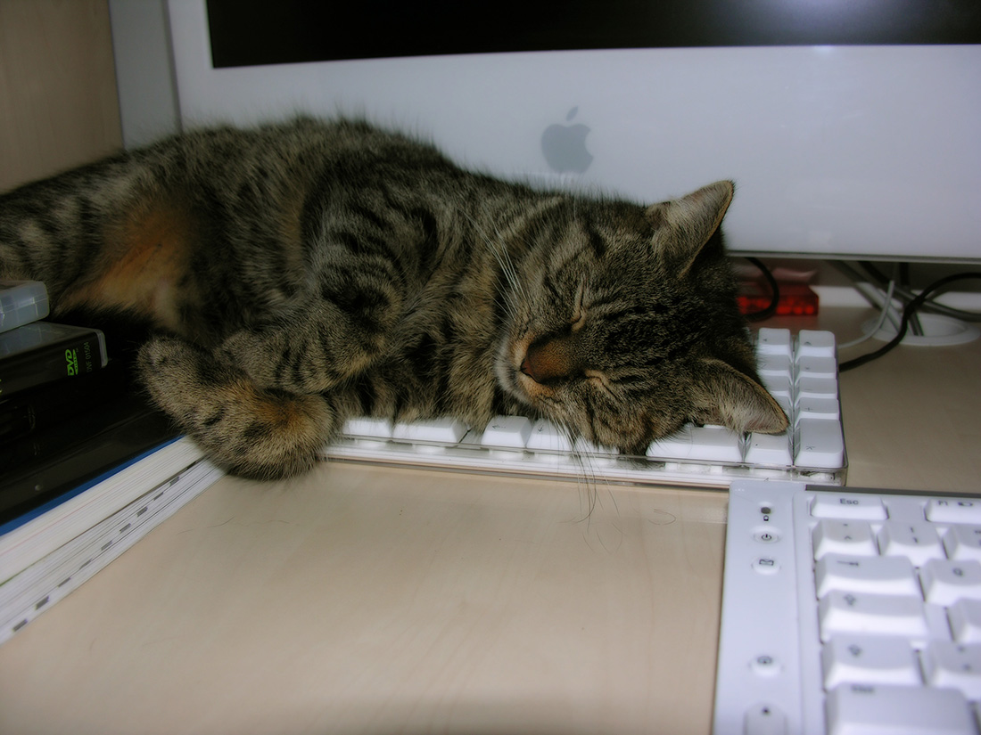 computer-cat-6