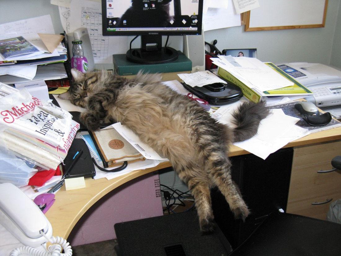 computer-cat-9